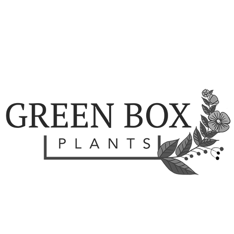 Green Box Plants